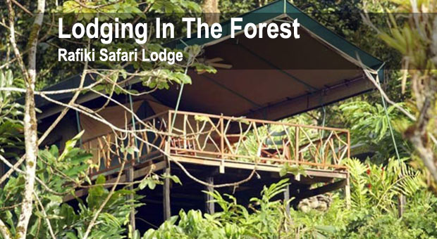 manuel-antonio-hotels-and-resorts-lodging-in-the-forest